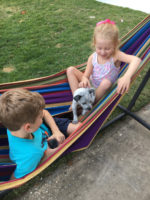 Doggy Boarding and Other Family Activities